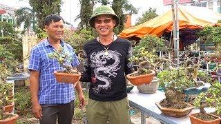 Si đồng Giá 400 Nghìn, Báo Giá Toàn Bộ Cây đẹp ở Triển Lãm Phủ Lý - Hà Nam - Bonsai Market In Ha Nam