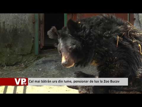 Cel mai bătrân urs din lume, pensionar de lux la Zoo Bucov