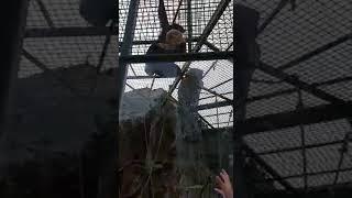 Hecna opica