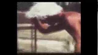 בריכת השחיה 1976 - סדריק ומשפחת אפטרוט