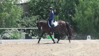 How to ride Dressage Training level test 1