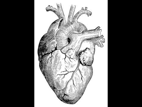 How To Draw Human Heart In Very Easy Way Smotret Onlajn Na Hah Life