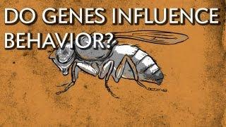 How Do Genes Influence Behavior? - Instant Egghead #18