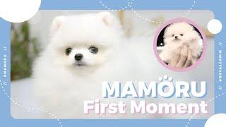 เจอน้องมาโมรุครั้งแรกเป็นยังไง 💕First Moment MAMORU🤍