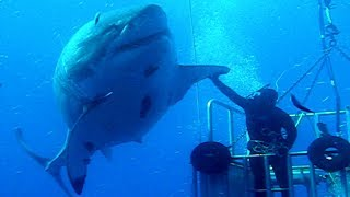 BIGGEST Sharks In The World!