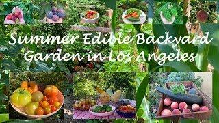 A Summer Backyard Edible Garden In Los Angeles | Garden Tour | Harvest | California | What To Plant