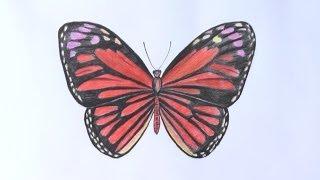 Смотреть онлайн Учимся рисовать бабочку карандашами