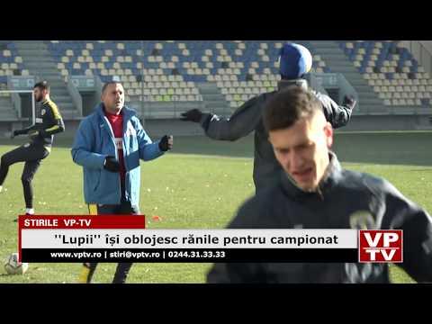 """""""Lupii"""" își oblojesc rănile pentru campionat"""