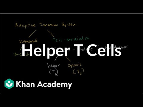 Helper T cells (video) | Immunology | Khan Academy