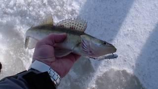 Рыбалка стригинские котлованы