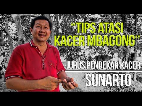 Video KISAH SUKSES : Sunarto Atasi Kacer Mbagong Jadi Gacor Buka Ekor