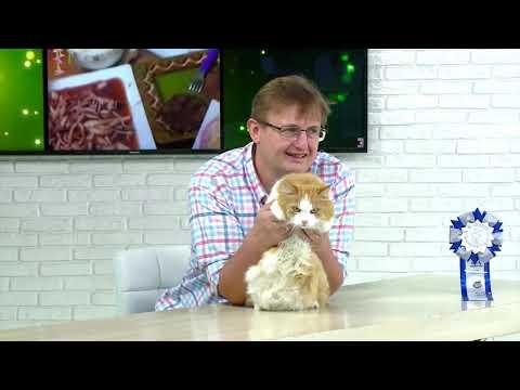 Советы ветеринара: онкология у кошек и собак