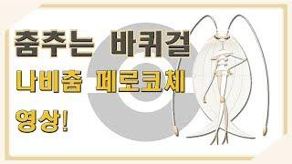 [포켓몬스터 SM] 춤추는 바퀴걸! 나비춤 페로코체 영상