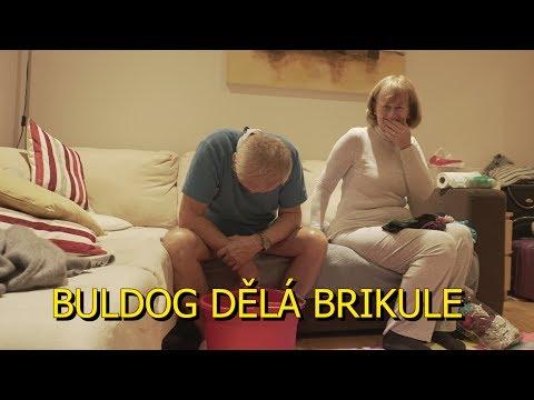 Buldog dělá Brikule (random vlog)
