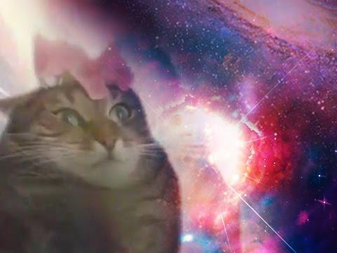 Kisse ymmärtää maailmankaikkeuden salaisuudet