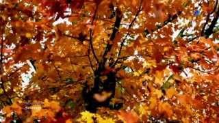 FRANZ SCHUBERT - Serenade  (HD)