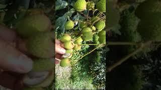 uttara epz nilphamari - Free video search site - Findclip