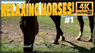 ★ 1 HOUR ★ ☯ NATURE HORSES #1 ☯ 4K relaxing horses ambience