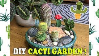 DIY Indoor Mini Cacti Garden!