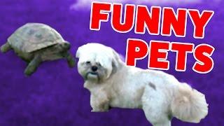 VULTURE VS. KANGAROO & MORE Pet & Animal Videos of 2016 Weekly Compilation | Funny Pet Videos