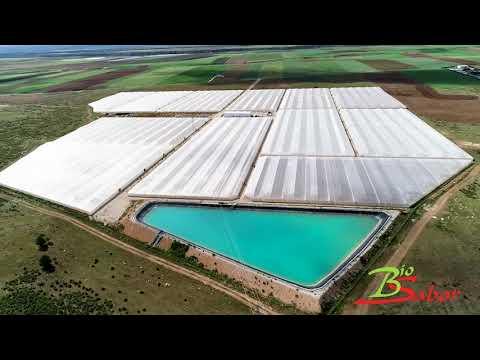 Finca de cultivo ecológico de Biosabor en Darro (Granada)