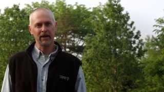 The Black Walnut: Trees, Pests & People