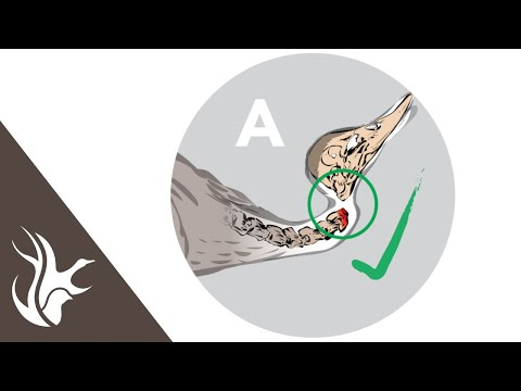 , title : 'How to perform the cervical dislocation method