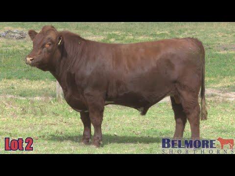 BELMORE KEEPER Q159