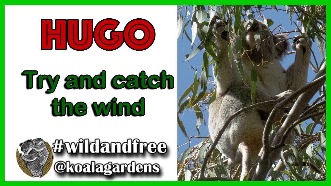 HUGO – try and catch the wind