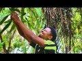 Nyolong Buah - Dubbing Sunda Lucu