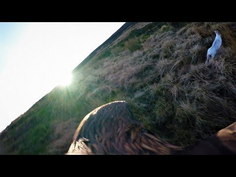 #Eaglecam 1 – Hunting Blue Hares in Scotland