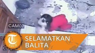 Video Viral Detik - Detik Aksi Heroik Kucing Lindungi Balita yang Nyaris Jatuh ke Tangga