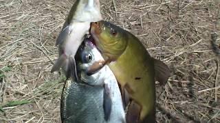 Витамин ревит для рыбалки