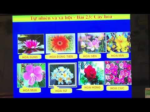 TNXH- Lớp 1- Bài 23- Cây hoa- Gv: Bùi Thị Hiên- Trường TH&THCS Thái Học