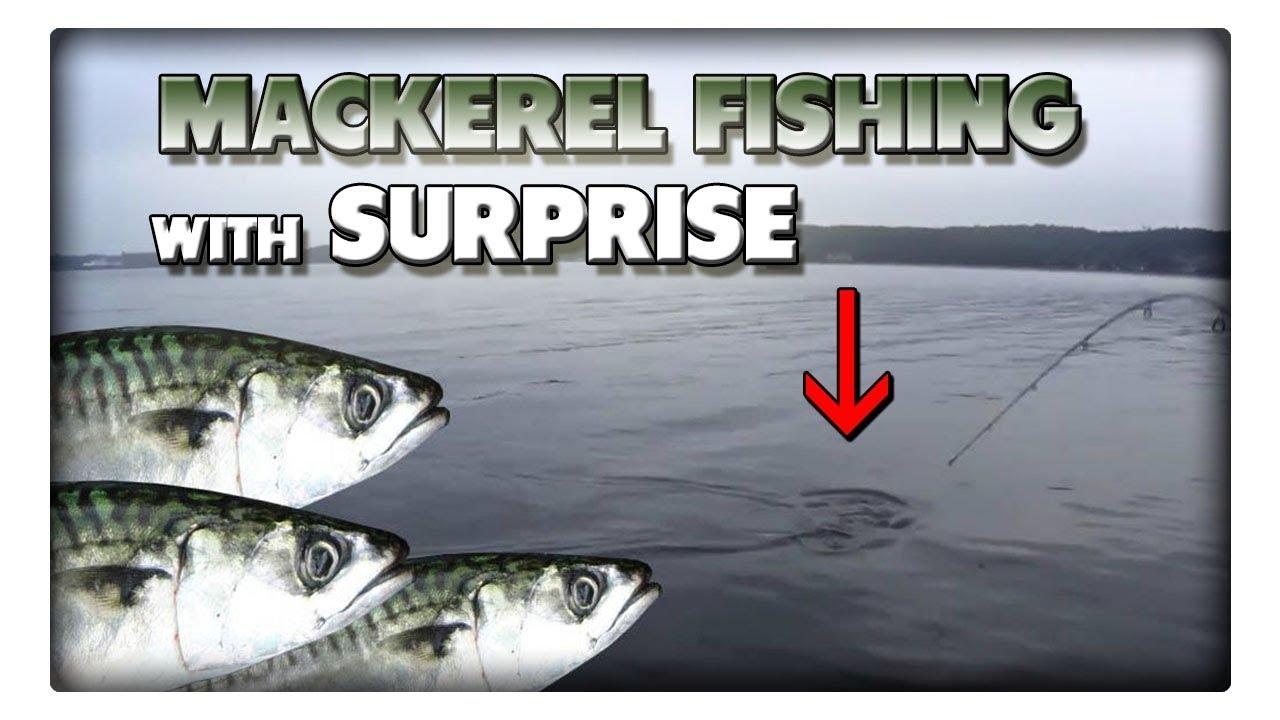 Angeln auf Makrele mit Überraschung