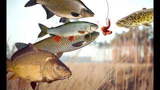 Какая рыба на что клюет