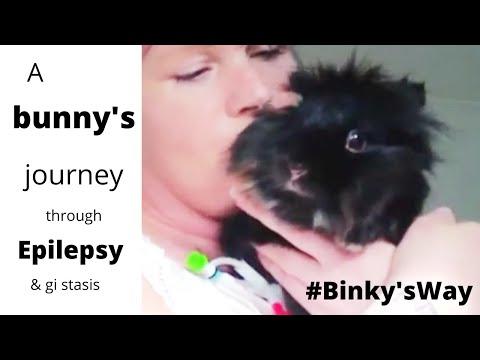 , title : 'rabbit with epilepsy / Binky bunny's journey FULL! / my rabbits journey to health/#binkys way