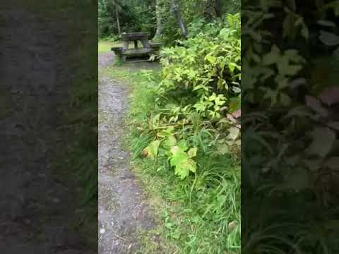 Video Of Coeur D'Alene Campground, AK