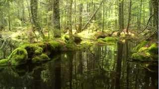 Identifying Vernal Pools in the Moosehead Lake Region