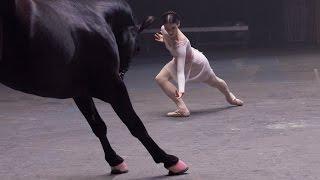 лошадь и кавказский танец  🎵