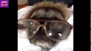Приколы! Смешная подборка домашних животных! Февраль 2014 ! Часть 2  Funny Cats Compilation