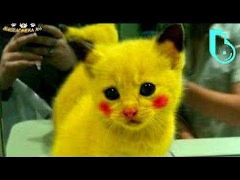 10 ТОП Смешных кошек Приколы с котами Видео коты Смешные коты и кошки Самые смешные приколы с котами