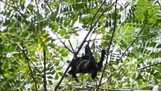2015-09-22 Fruit Bats, Darwin