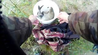 Где ловят леща в калининградской области