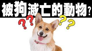 【被狗滅亡的動物?】冷知識 | 鈞發現 |