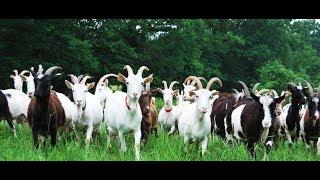 goat farming in kerala project report - TH-Clip