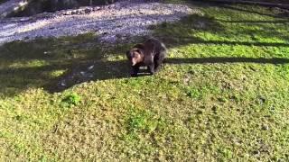 Juraparc - Vidéo aérien