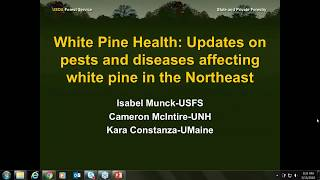 White Pine Health  Updates on pests and diseases affecting white pine in the Northeast