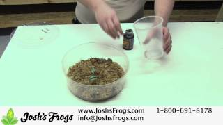 How To Feed Dart Frog Froglets