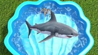 Множество Диких Животных В Зоопарке Изучают Цвета В Голубой Воде С Помощью Видео Сафари Для Детей С